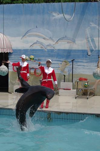 Shanghai Wild Animal Park - Sea lion show / 上海野生动物园 - 海狮节目