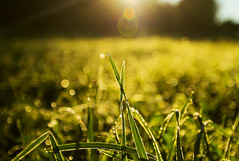 Good Morning! (Matt Champlin) Tags: fall autumn goodmorning morning life gold golden sun sunlight refreshing canon 2016 bokeh peace peaceful goldenlight magichour dew droplets saturday weekend