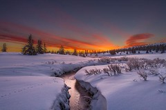 Sunrise in Norway | Photography by Jrn Allan Pedersen (manbeachrm) Tags:  clouds sunsets  blue naturelovers sunrise orange sunsetstream sunsetporn sundown skylovers pordosol cloud skylinen natureperfection naturelover landscapelovers landscapes natur landscapecaptures horizon puestadesol silhouette