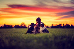 Beloved (Bokehschtig (ON/OFF)) Tags: aussie australianshepherd dog dogs sunset sundown girl love lowpov animal hunde shepherd sonya7m2 sonya7ii a7ii sel85f14gm gmaster 85mm f14 bluehour clouds cloudscape colors atmosphere mood peaceful peace