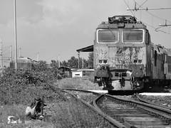 torino orbassano #31 (train_spotting) Tags: tigre trenitalia depositolocomotive torinoorbassano e652065