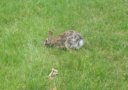 Bunny_6711h
