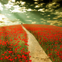 ~ the way to dreamland ~ (~ Pixel Passion ~) Tags: flowers two sky people woman sun man field sunshine clouds walking hope couple mood moody path walk photoshopped hill dream meadow atmosphere happiness sunny manipulation human luck lucky poppies processing both dreamy rays concept conceptual dreamland atmospheric pathway treatment hopeful postprocessing