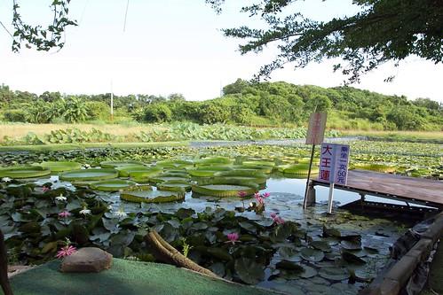 20110620白河蓮花季-5665