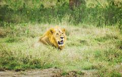 "PhotoFly Travel Club Kenya Safari 2011! • <a style=""font-size:0.8em;"" href=""http://www.flickr.com/photos/56154910@N05/5892409033/"" target=""_blank"">View on Flickr</a>"