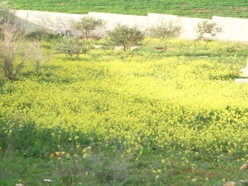 الاردن في الربيع صور 5909540101_4bbc35da2f.jpg