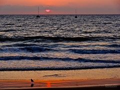 Beach sunset bird & boats (RobertCross1 (off and on)) Tags: ocean california sunset sun sol beach water birds landscape boats atardecer la losangeles surf waves pacific socal puestadelsol playadelrey xploration