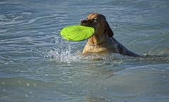 Dog (Marci's) Tags: dog cane nikon mare palermo mondello d5100