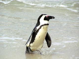 Cape Town Luxury Safari 3