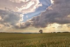 Isre - Nord Isre - campagne  - ciel nuageux (Jean-Philippe Le Royer) Tags: sky cloud landscape ciel arbres nuages paysage campagne paysages isere paysagesmontagne