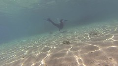 GOPR0187-LR (self-unemployed) Tags: japanesegarden redsea scuba diving jordan aqaba gulfofaqaba