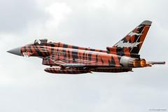 Eurofighter Typhoon 30+09 (testdummy76) Tags: plane canon aircraft eurofighter airforce flugzeug schleswig tigermeet jagel tyhoon 3009 ef2000 natotigerassociation taktlwg74 ntm2014