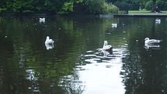 P1010825 (J. Prat) Tags: stephen green park