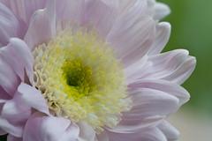 Flower macro 1719