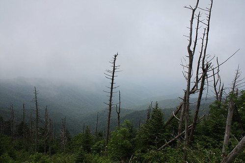 Another Sad Vista on Clingmans Dome