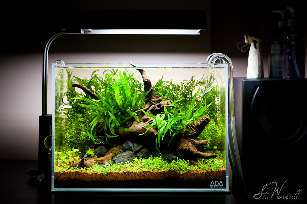 Stu's ADA Mini M | AquaScaping World Forum