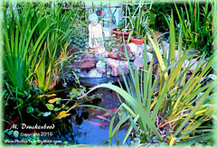Garden fish pond Millville NJ - digital watercolor (PhotosToArtByMike) Tags: garden digitalart digitalpainting computerart koi fishpond goldfishpond digitalwatercolor millvillenj millvillenewjersey