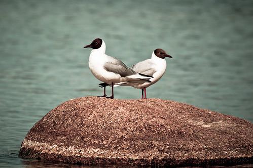 gulls by Valentyn Chub