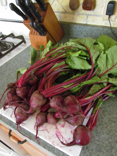 Bunch of Beets from the CSA