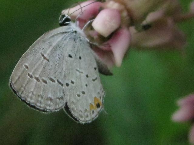 summer fauna V