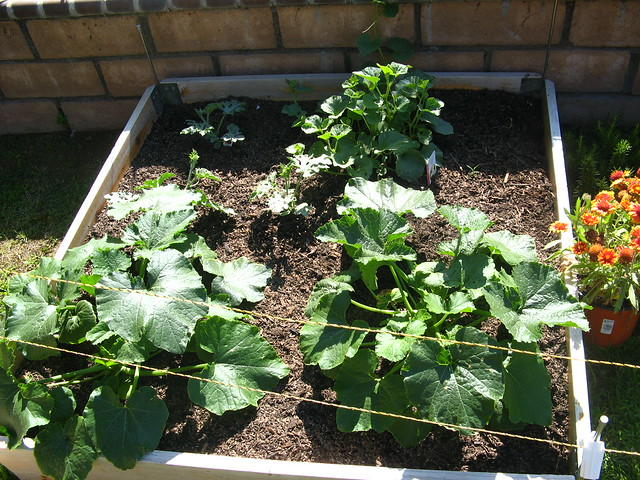 Garden 7/2/2011
