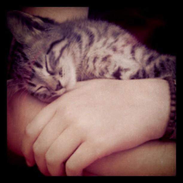 The World's Best Photos of kitten and ninja - Flickr Hive Mind