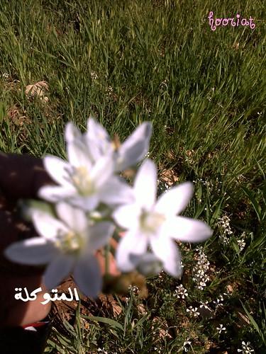الاردن في الربيع صور 5909637868_a9b712a45c.jpg