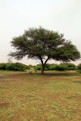 Title Tree (Abdulrahman AlShetwi) Tags: trees cloud tree spring