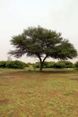 Title Tree (Abdulrahman AlShetwi) Tags: trees cloud tree spring saudi arabia            alshetwi