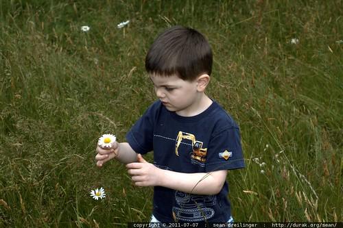 picking daisies - MG 5156.JPG