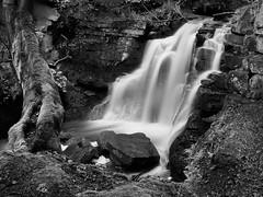 Watergate Burn 3 (Stephen Marriott) Tags: blackandwhite water monochrome mono waterfall northumberland nik silverefexpro2