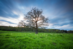 The Tree of Life (Athenon Loc) Tags: sunset tree canon pose eos soleil long exposure angle mort wide coucher grand prairie arbre printemps fort creuse verdure loc 6d longue 1635mm praie margnat athenon