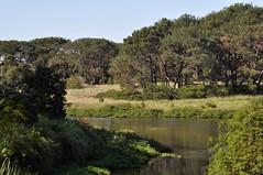 Kensington Ponds 3 (john cowper) Tags: sydney newsouthwales kensington