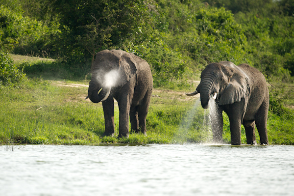 RYALE_Rwanda_Uganda_Safari-234