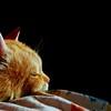 ciccio (archifra -francesco de vincenzi-) Tags: italy cat chat colore gato chiaroscuro gatto ritratto arancio ciccio molise isernia fiatlux greatphotographers abigfave colorphotoaward flickraward archifraisernia francescodevincenzi mygearandme