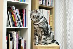 (命は美しい) Tags: cat 貓 徠卡