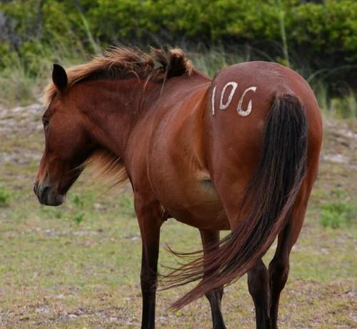 Pony10GBeach2011