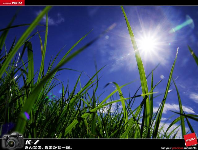 向陽農場行