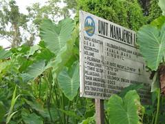 IMG_0183 (RarePlanet) Tags: wildlife reserve credit aceh singkil photo fransisca bogor1 rawa sumatra ariantiningsih