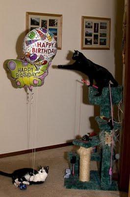 cat_birthday_parties_09