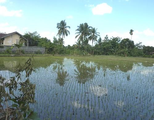 Lombok-Mataram (147)