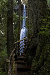Exploring Olympic (Darcy Richardson) Tags: park wood trees usa water america canon waterfall washington rainforest steps growth national vegetation olympic olympicnationalpark marymerefalls 50d