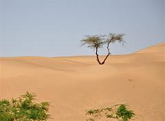 We're Getting Closer (The Spirit of the World ( On and Off)) Tags: india landscape sand desert silkroad rajasthan desertlandscape thardesert rememberthatmomentlevel4 rememberthatmomentlevel1 rememberthatmomentlevel2 rememberthatmomentlevel3 gentlesanddunes borderofindiaandpakistan