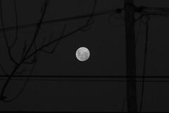 Luna Lunera... (www.luxetpix.com) Tags: clara noche luna montevideo