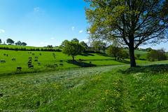 Little Walk (Guido Bl.) Tags: germany landscape wiese nrw landschaft brd ennepetal breckerfeld