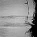 Série P&B em Filme - abstratos em Viena - ondas