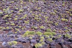 Karoo Vegetation (Proteus_XYZ) Tags: southafrica nationalpark südafrika westerncape overberg karoo tankwa westlichekapprovinz karru