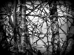 Thorny Branches (BlackAndBlueBeauty) Tags: white black montana butte branches thorny