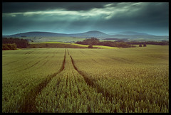 (~~StuArt~~) Tags: storm field clouds canon corn moody wheat tracks northumberland crops cheviots leadinglines cheviot thecheviots hedgehope canonef24105lis achallengeforyou canoneos5dmkii hitechprostopper hitech100mmfilters hitech09hardgradnd