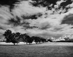B/W SUMMER  (EXPLORED) (kenny barker) Tags: trees summer sky bw clouds landscape scotland panasonic fields g1 falkirk